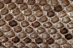 Snake skin. Royalty Free Stock Photo
