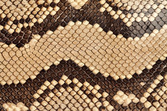 Snake skin. Royalty Free Stock Photography