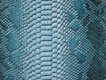 Snake skin background. Close up Stock Images