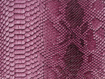 Snake skin background. Close up Royalty Free Stock Photos