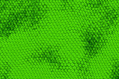 Snake skin. Background made of snake skin Stock Image