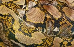 Snake skin background royalty free stock image