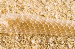 Snake skin on beach Royalty Free Stock Photos