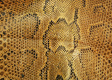 Snake skin Royalty Free Stock Photography