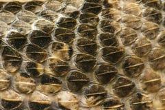 Snake Skin Stock Images