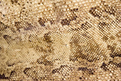 Snake-skin closeup Royalty Free Stock Photography