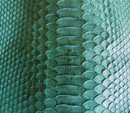 Snake skin. Color Snake skin as background Stock Image
