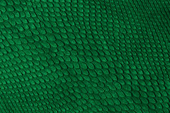 Snake skin. Green snake skin for background Royalty Free Stock Photography
