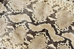 Snake skin leather. Close-up Stock Photos
