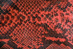 Snake Skin Leather Texture royalty free stock photos