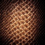 Snake skin leather texture Royalty Free Stock Images