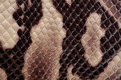 Snake skin patter Stock Photo