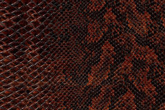 Snake skin pattern Royalty Free Stock Image