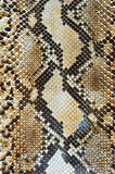 Snake skin pattern background. Art royalty free stock photo