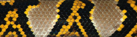 Snake skin pattern detail Royalty Free Stock Images