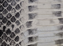 Snake skin, reptile Stock Images