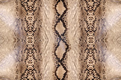 Snake skin, reptile Royalty Free Stock Images