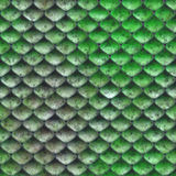 Snake skin Royalty Free Stock Photo