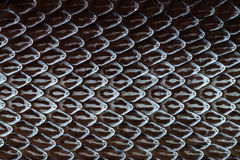 Snake skin, Snake molt Royalty Free Stock Photo