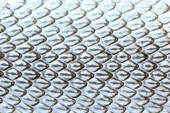 Snake skin, Snake molt Royalty Free Stock Image