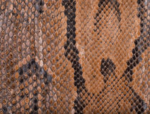 Snake skin surface texture close up for background Royalty Free Stock Images
