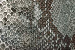 Snake skin texture. Gray snake skin texture background Royalty Free Stock Image