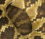 Snake skin texture Stock Photography