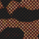 Snake Skin Texture Stock Photos