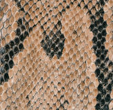 Snake skin texture as a background Royalty Free Stock Photos
