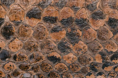 Snake skin texture as a background Royalty Free Stock Photography