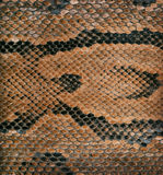 Snake skin texture as a background Royalty Free Stock Image