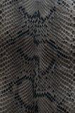 Snake skin Royalty Free Stock Images