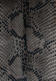 Snake skin Stock Photography