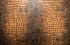snake skin texture for background Stock Image