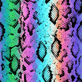 Snake skin texture  with colored rhombus Stock Photo