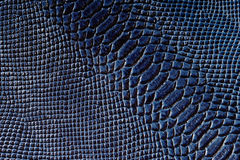 Snake skin. Texture of dark blue snake skin Royalty Free Stock Photos