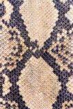Snake skin texture Stock Photo