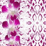 Snake skin texture pink flowers, orchid Stock Photos