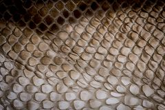 Snake skin - texture. Close up in the detail royalty free stock image