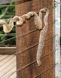 Snake Skin on Wire Fence Royalty Free Stock Image