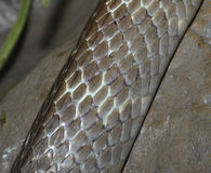 Snake skin in the zoo Stock Photos