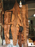 Snake skins Royalty Free Stock Photo