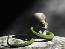 Snake and skull Stock Image