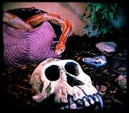 Snake or Skull Royalty Free Stock Image