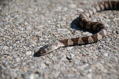 Snake on stones royalty free stock photography