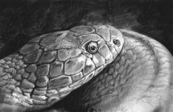 Snake tattoo sketch illustration made with pencil. Draw Royalty Free Stock Photography