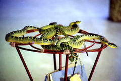 Snake Temple. The Snake Temple is situated in Sungai Kluang, Bayan Lepas, Southwest Penang Island, Penang, Malaysia and is perhaps the only temple of its kind in Stock Photo