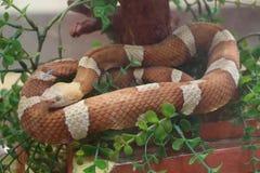 Snake in a terrarium Stock Image