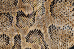 Snake texture. Photo of a brown snake skin with high detail
