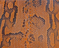 Snake texture Stock Image